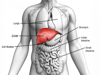 14 loại thức ăn có lợi và có hại  cho gan